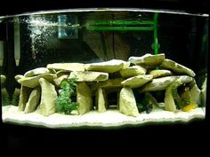 Using sand in your reef aquarium? Let our Sand Bed Calculator figure out how much sand you'll need. Cichlid Aquarium, Cichlid Fish, Reef Aquarium, Aquarium Fish Tank, Saltwater Aquarium Setup, Tropical Fish Aquarium, Aquarium Ideas, Tropical Freshwater Fish, Freshwater Aquarium