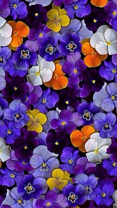 """Newest Snap Shots Pansies wallpaper Strategies Pansies are the colorful flowers with """"faces."""" A cool-weather favorite, pansies are ideal for bo Plant Wallpaper, Purple Wallpaper, Flower Wallpaper, Wallpaper Wallpapers, Iphone Wallpapers, Rare Flowers, Pretty Flowers, Purple Flowers, Purple Plants"""