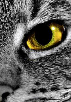 Oko šelmy