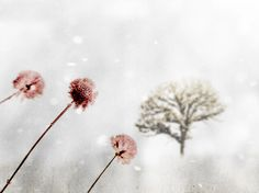 Pink and Gray Winter Photograph Winter's by galleryzooart on Etsy, $30.00