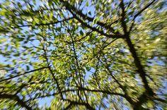 Každý strom také hraje určitou roli v mezoklimatu, tak třeba takový buk je do města nepřijatelný, protože potřebuje vysokou vzdušnou vlhkost. Ale standardní strom s korunou o průměru 10 metrů chladí takovým výkonem, jaký by podalo 191 ledniček. Plants, Plant, Planting, Planets