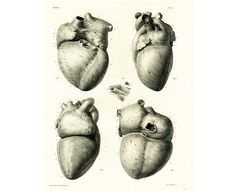 Authentic Large size lithograph. Heart Anatomy Art Poster - Vintage #Heart Book Plate Illustration Print - Antique Heart Diagram Poster - #Cardiology Student Gift Idea  From ... #bourgery #heart #cardiology #cardiovascular