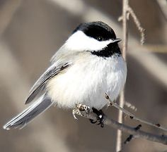 Songbirds' songs come from 'hymn sheets in their heads' | TopNews