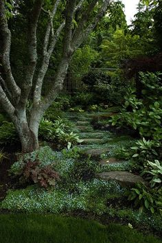shady garden path - has a mystical vibe, my little boys would love playing in there... More