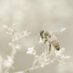 bohemian bee keeper