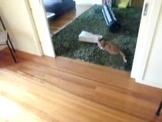 Cat Laser Bowling