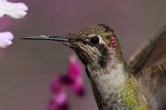 Annas Close Up by Paul Marto on 500px