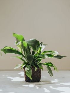 Go Green, November, Plants, Plant, Planting, Planets