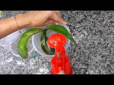UTI Para Orquídeas Esclarecendo Dúvidas - YouTube