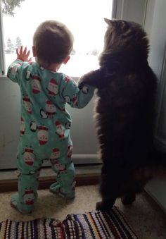 赤ちゃんに雪景色を見せてあげる優しい猫のお兄ちゃん (写真3枚) | エウレカ!eureka! - もふもふ犬猫動画