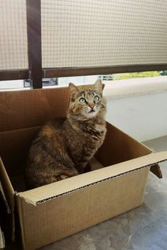 kitty in a box :-)