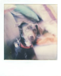 Impossible Project SX-70 Colour Film. Taken with a SX-70 Sonar OneStep Land Camera