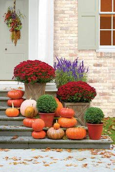 Deep scarlet mums pair perfectly with bright orange pumpkins in October.