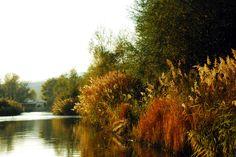 https://flic.kr/p/6XHeJg | Nestos, river nature