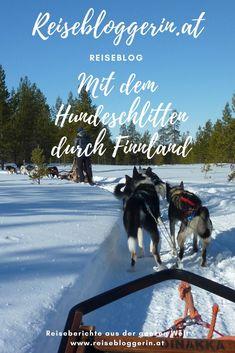 Mein Reisetipp für Finnland: Sei mit einem Hundeschlitten unterwegs #hundeschlitten #finnland