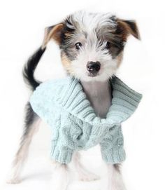 Organic Collared Dog Sweater | Teacupspuppies.com #DogsInClothes #Dogs In #Clothes Dog Clothing