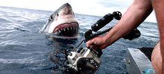 De terroristas y tiburones, noticias de Australia - http://www.absolutaustralia.com/de-terroristas-y-tiburones-noticias-de-australia/
