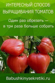 Growing Tomatoes, Small Farm, Farm Gardens, Vegetable Garden, Vegetables, Green, Plants, Appetizers, Gardens