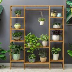 Plants The most classic green plant ornament - Kornelia Nowak, # green plant ornament # classic Indoor Plant Shelves, Garden Shelves, Indoor Plant Stands, Garden Plant Stand, Wood Plant Stand, House Plants Decor, Plant Decor, Cool Plants, Green Plants