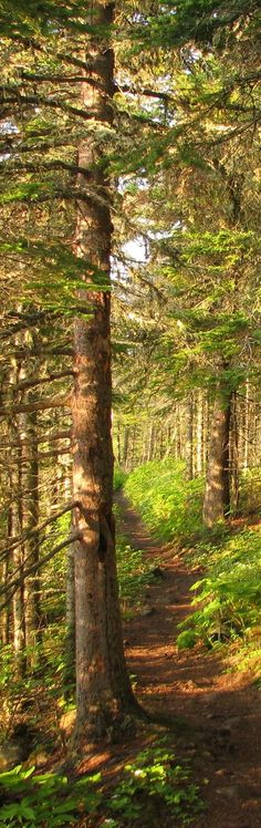 Been on this trail and it is beautiful! Tobin Harbor Trail, Isle Royale National Park,  Michigan