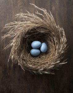 3 Robin's eggs in nest