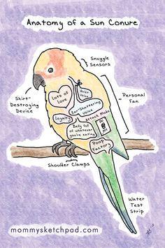 ♥ Pet Bird Stuff ♥ Anatomy of a Sun Conure