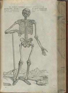 This skeletal engraving from Andreas Vesalius' book was reproduced in the faux-book