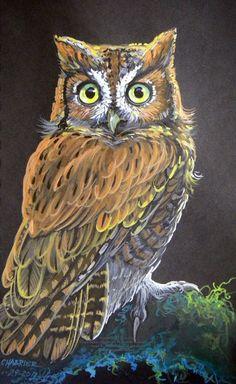 Surprised Little Owl by HouseofChabrier on DeviantArt Owl Photos, Owl Pictures, Animal Paintings, Animal Drawings, Owl Drawings, Owl Bags, Owl Tattoo Design, Little Owl, Felt Owls