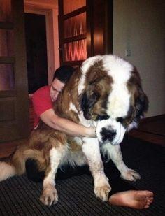 21 chiens qui ont vraiment sous-estimé leur taille