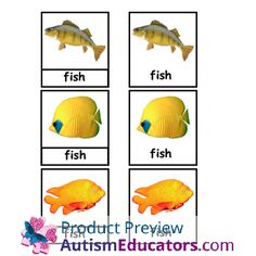 ABA/VBA Matching Identical and Non-Identical Real Photo Flashcards for Autism: Inspired by Evan Autism Resources.