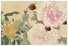 Kono Bairei (1844- 1895) Japanische Farbholzschnitte