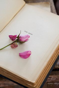 Ana Rosa - The rose Planter Rosier, Book Flowers, Dried Flowers, Book Aesthetic, French Country Cottage, Foto Art, Rose Cottage, Old Books, Pastel Decor