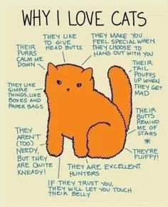 Why I love cats..not so much the hunting bit..