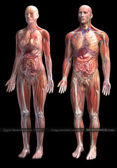 """The physical body is composed of various complex interlocking systems; the nervous, skeletal, cardiovascular, and lymphatic systems, and the skin, which maintains the visible mundane body. The bioluminescent imaginal body is a series of complex bioelectromagnetic and conscious subtle """"life energy"""" sheaths overlapping and inter-penetrating the physical body."""
