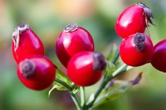 DIY Anti Aging Recipes ~ Anti Aging Serum - Rose Hip