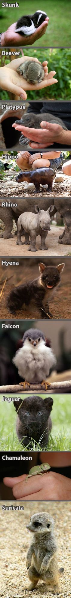Cuteness Overload | Webfail - Fail Pictures and Fail Videos