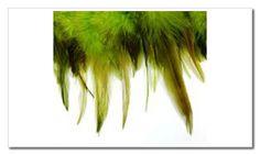 tira de plumas verde