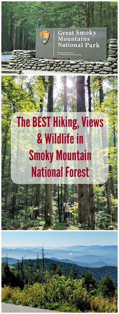 10 Things to Do in Great Smoky Mountains National Park & Gatlinburg, TN The Ultimate Guide to the Smoky Mountains and TN for your next or getaway! What to see, where to stay and great places to eat! Gatlinburg Vacation, Gatlinburg Tennessee, Tennessee Vacation, East Tennessee, Tennessee Attractions, Camping Places, Camping World, Camping Gear, Great Smoky Mountains