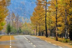 Hulun Buir, Inner Mongolia Meadows, natural beauty, scenery, daylight, outdoor, unmanned, autumn, golden autumn, pastoral, road, environment, road, terrain, forest
