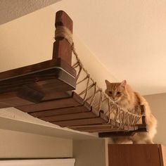 Paracord Rope UPGRADE must purchase Cat Bridge separately Cat Wall Furniture, Modern Cat Furniture, How To Clean Furniture, Sisal, Crazy Cat Lady, Crazy Cats, Paracord, Cat Walkway, Cat Hotel