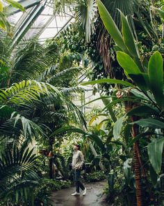 Our latest trip for @woolrich is now live. We spent a few days exploring Amsterdam including the incredible @hortusamsterdam - Click the link in our profile for more. #HaarkonGreenhouseTour