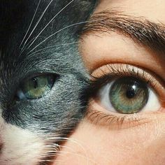 Ideas For Cats Art Photography Portraits I Love Cats, Crazy Cats, Cute Cats, Pretty Eyes, Beautiful Eyes, Eye Photography, Amazing Photography, Belle Photo, Cats And Kittens