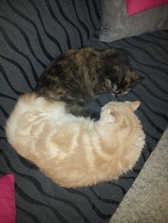 Mijn 'harige kinderen' Simba en Nala.
