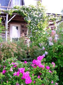 Romantic Gardening: The Best Budget Gardening Tips