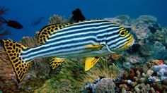 Beautiful Fishes From The Ocean
