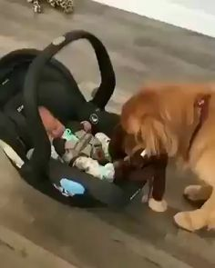 Dog brings favorite toy to welcome new baby - Welpen Animals And Pets, Funny Animals, Cute Animals, Funny Animal Pictures, Dog Pictures, Baby Dogs, Baby Baby, Doggies, Cute Puppies