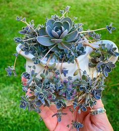Your succulents can really benefit from a light trim every now and then. Trimming down your succulents helps maintain them compact and healthy. Succulent Gardening, Succulent Terrarium, Container Gardening, Cacti Garden, Fairies Garden, Indoor Gardening, Cacti And Succulents, Planting Succulents, Planting Flowers