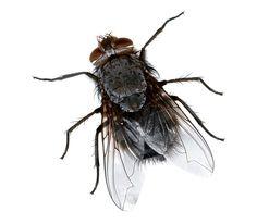 دليلك لمكافحة حشرات المنزل في فصل الصيف