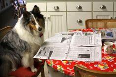 Barkley reading the morning paper
