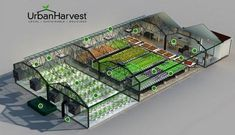 UrbanHarvest Selects LumiGrow LED Technology for Seattle's Millionair Club Charity Indoor Farm - LumiGrow Horticultural LED Growth Lights Indoor Farming, Indoor Aquaponics, Hydroponic Farming, Aquaponics Greenhouse, Greenhouse Plans, Aquaponics System, Urban Agriculture, Urban Farming, Permaculture